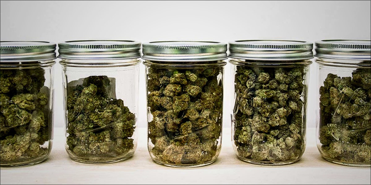 How Long Does Weed Stay Fresh Herb