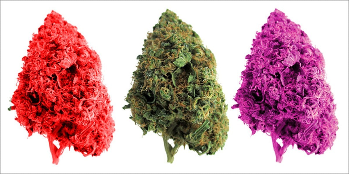 Purple, Red & Green Weed: A Guide To Your Bud Colors   Herb