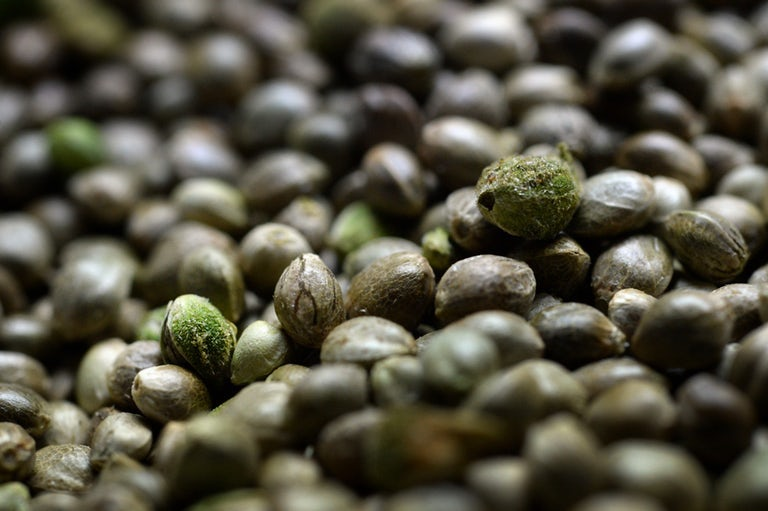 Hemp Seed Oil for Psoriasis and eczema