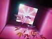 Best-LED-Grow-Lights-24